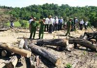 Giám đốc chủ mưu phá 61 ha rừng bị bắt