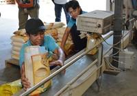 Gạo Việt tự hại nhau, thương nhân Trung Quốc hưởng lợi