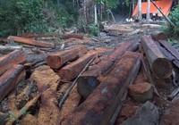 Ngang nhiên phá rừng cạnh trạm bảo vệ