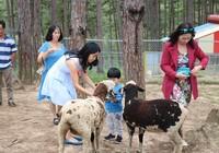 Check in Đà Lạt,  ghé Zoo Doo chơi cùng kangaroo