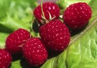 10 loại rau quả giúp ích nhất cho việc giảm cân