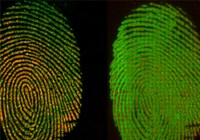 Cách mới giúp xác định đúng thời điểm dấu vân tay tại hiện trường
