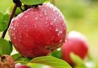 9 loại thực phẩm hỗ trợ ngăn ngừa ung thư
