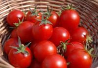 13 thực phẩm chống cháy nắng cực hiệu quả