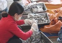 Chưa thể trả lời 'cá biển ở bốn tỉnh miền Trung ăn được chưa?'