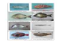 154 loại hải sản miền Trung khuyến cáo chưa được ăn-P4