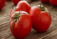 '7 không' ai cũng phải nhớ khi ăn cà chua