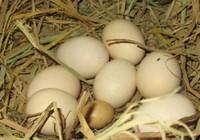 20-11 và 10 quả trứng gà...