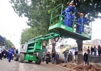 Chặt hạ, di dời 1.159 cây xanh ở phố Phạm Văn Đồng