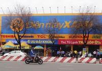 TP.HCM: Cây chết kỳ lạ trước cửa hàng Điện máy Xanh