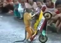 Trố mắt xem khỉ lái mô tô