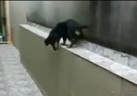 Cười ngặt nghẽo với chú chó chạy thụt lùi