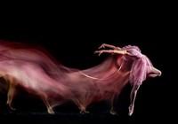 Ngỡ ngàng với vẻ đẹp của các vũ điệu Ba lê