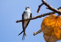 Vườn Quốc gia Yok Don mùa này có gì đẹp?