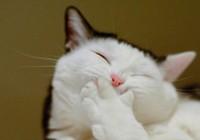 Cười lăn xem chú mèo béo tập thể dục