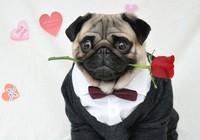 Những màn tỏ tình bất thành đáng yêu của cún