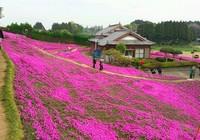 Cụ già trồng một đồi hoa để tặng người vợ mù