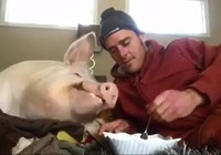 Buồn cười chủ và lợn cùng ăn bim bim