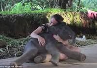 Chú voi con nũng nịu ngồi vào lòng du khách