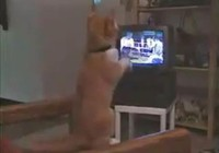 Chú mèo 'gân' chưa từng thấy