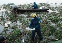 Chùm ảnh: Dân quân thu gom cá biển chết dạt vào bờ