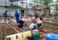 Sinh viên dựng 'vườn rau liệu pháp' tặng bệnh viện