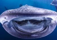 """Khoảnh khắc thú vị: Hải cẩu tạo dáng, """"nụ cười"""" của cá mập voi"""