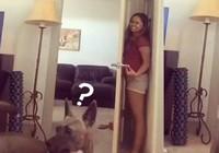 Bật cười với chú chó ngơ ngác kiếm tìm cô chủ