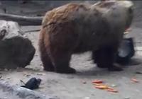 Thích thú với chú gấu cứu sống chim đuối nước