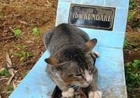 Chú mèo một năm ròng không rời mộ chủ