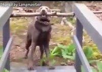 Chú chó sẽ làm cách nào để qua cầu với thanh gỗ?