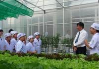 Ngắm vườn rau xanh mướt của học sinh tiểu học