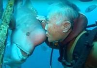 Tình bạn 25 năm của người và cá