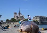 'Cá voi' bất ngờ mắc cạn giữa thủ đô Paris