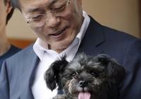 Tổng thống Hàn Quốc 'giải cứu' cún bị bỏ rơi