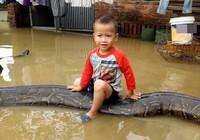 Bé cưỡi trăn khổng lồ ở Thanh Hóa gây choáng báo Anh