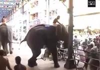 Clip: 'Voi điên' quật chết người tại lễ hội Ấn Độ