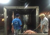 Cấm cửa heo không rõ nguồn gốc vào chợ
