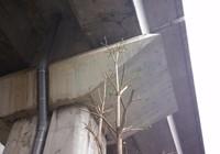 Độc nhất vô nhị: Trồng cây dưới… gầm đường sắt