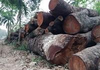 Tổng Thanh tra Chính phủ đề nghị làm rõ vụ chặt cây xanh Hà Nội