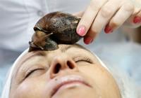 Mặt chứa cả ổ giun lươn bì vì đắp ốc sên làm đẹp da