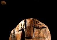 Bí ẩn tượng gỗ 11 vạn năm không mục nát