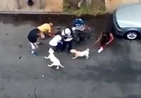 Thả chó pitbull cắn đứt tai người đàn ông trên phố