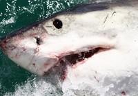 """Thoát chết khỏi hàm cá mập nhờ đòn """"nhất dương chỉ"""""""
