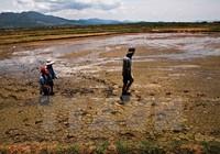 Việt Nam đối mặt một mùa đông ấm và El Nino kéo dài kỷ lục