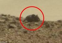 Dân mạng rúng động với ảnh chuột khổng lồ trên sao Hỏa