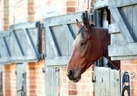 Báo động ngựa bị lạm dụng tình dục