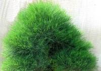 Những loài cây nhất quyết không được trồng trong vườn nhà