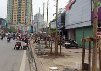 Chủ tịch Hà Nội yêu cầu cử người đi nước ngoài học trồng cây