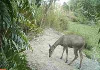 Vườn quốc gia Cà Mau phục hồi nhiều loài có nguy cơ tuyệt chủng